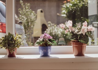 three potted plants by the window during daytime