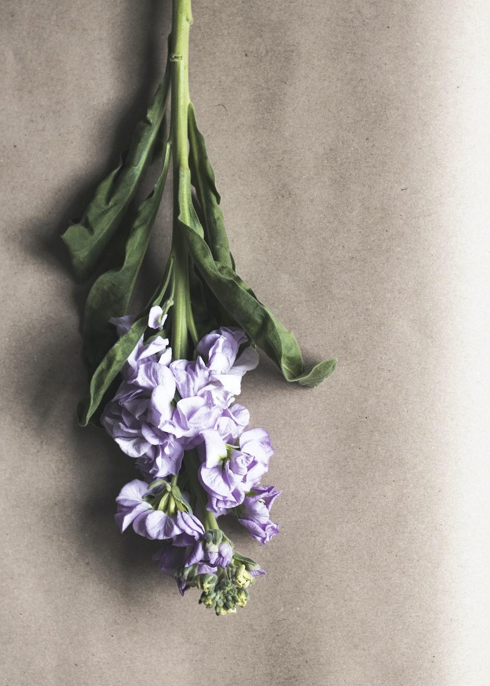 Iris flower on floor