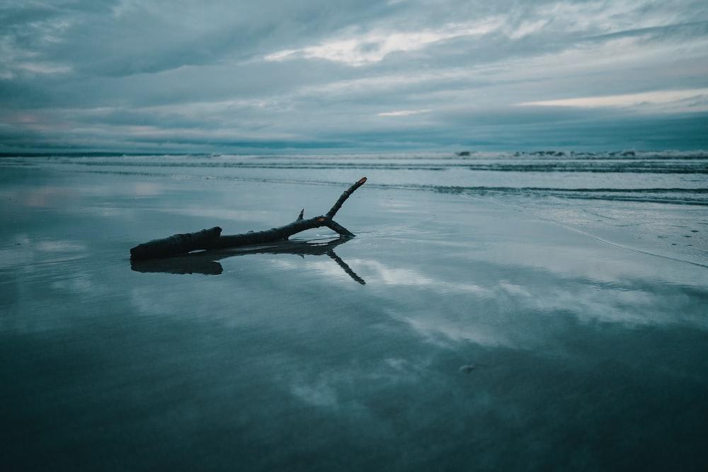 gray log on sea view calm sea