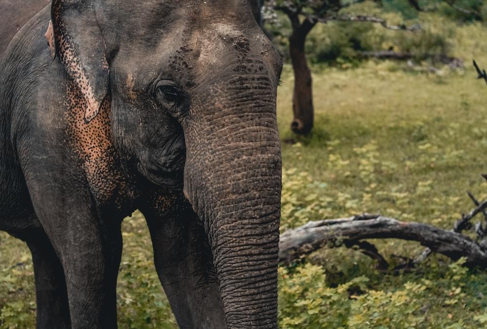 elephant on green field