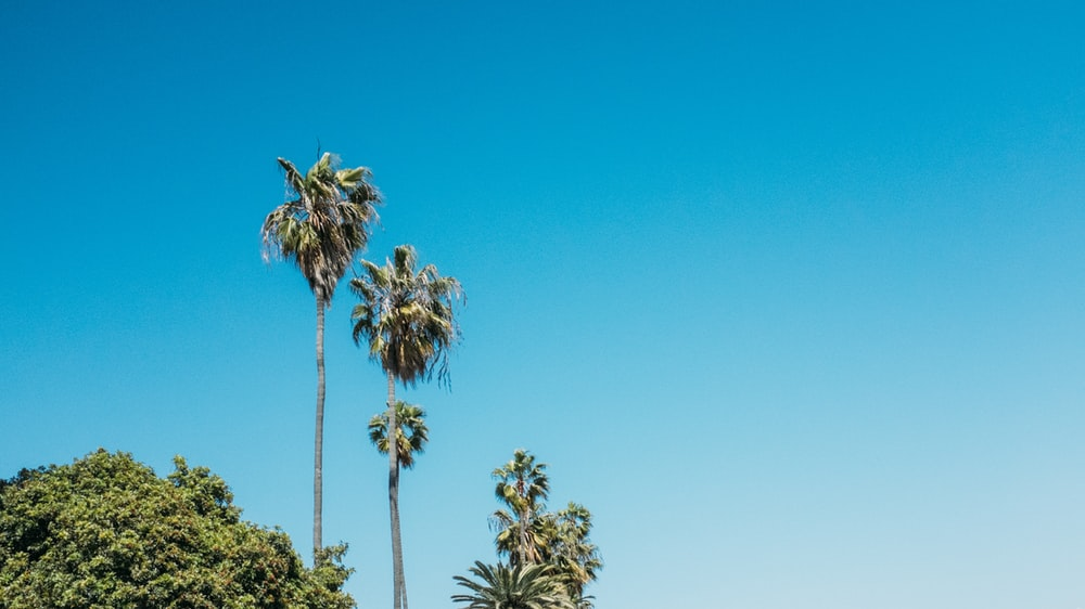 green palm trees under clear blue sky