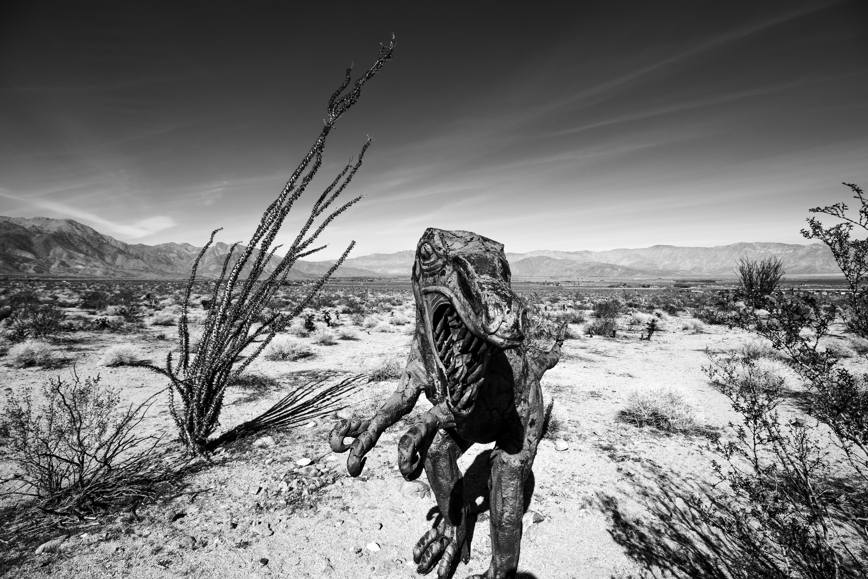 gray scale photo of creature in desert