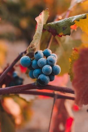 4656. Bor,szőlő, borászatok
