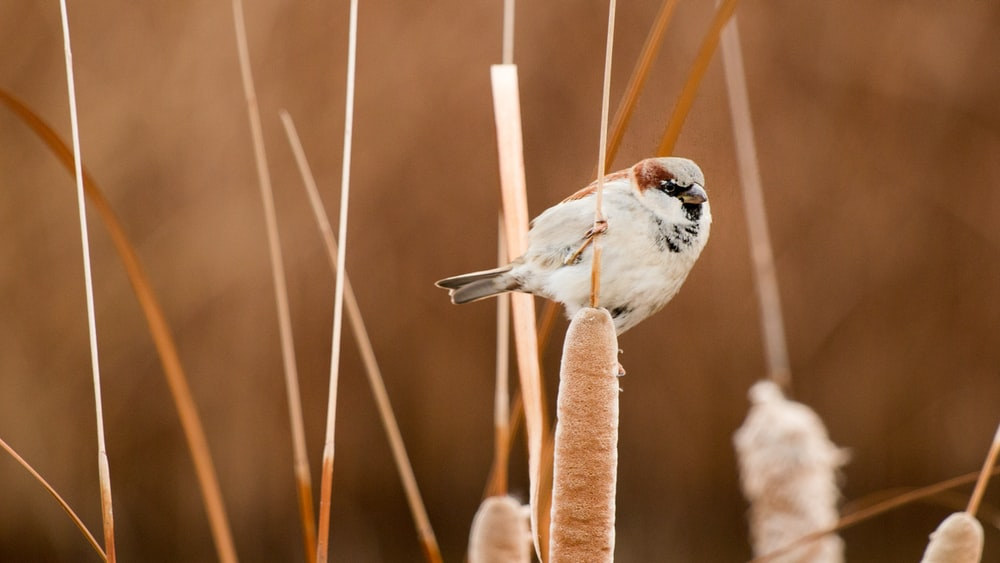 selective focus photography of white and brown short-beaked bird perched on brown plant