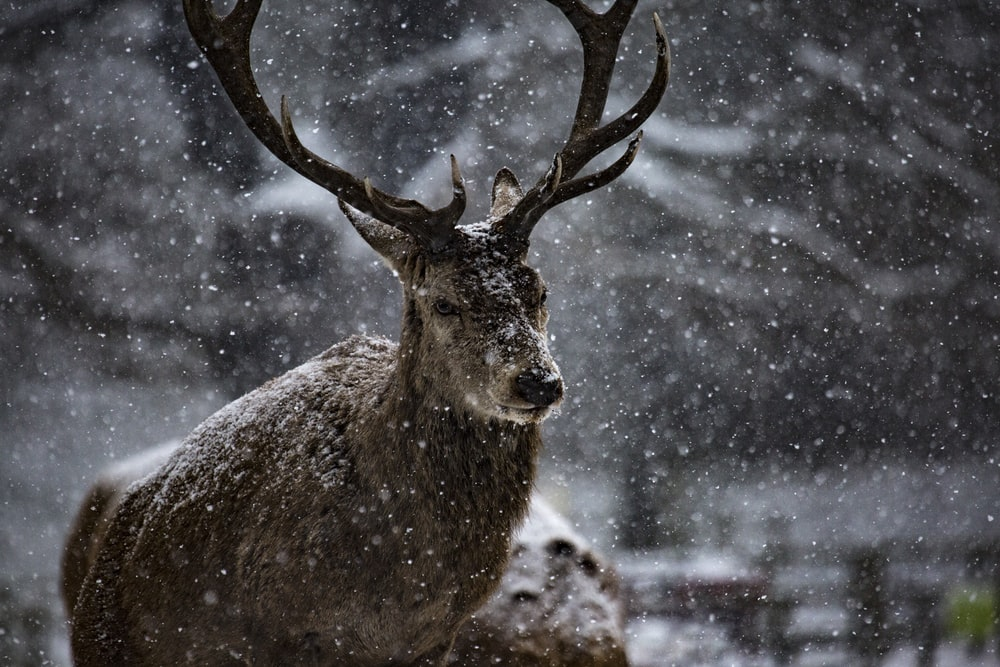 animal covered in snow