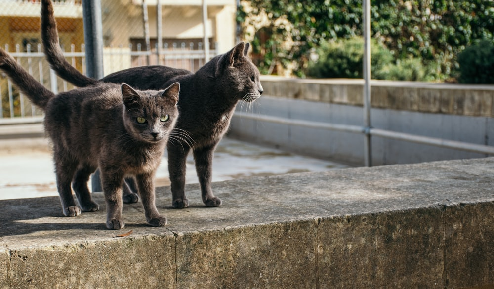 two bombay cats on gray concrete pavement at daytime