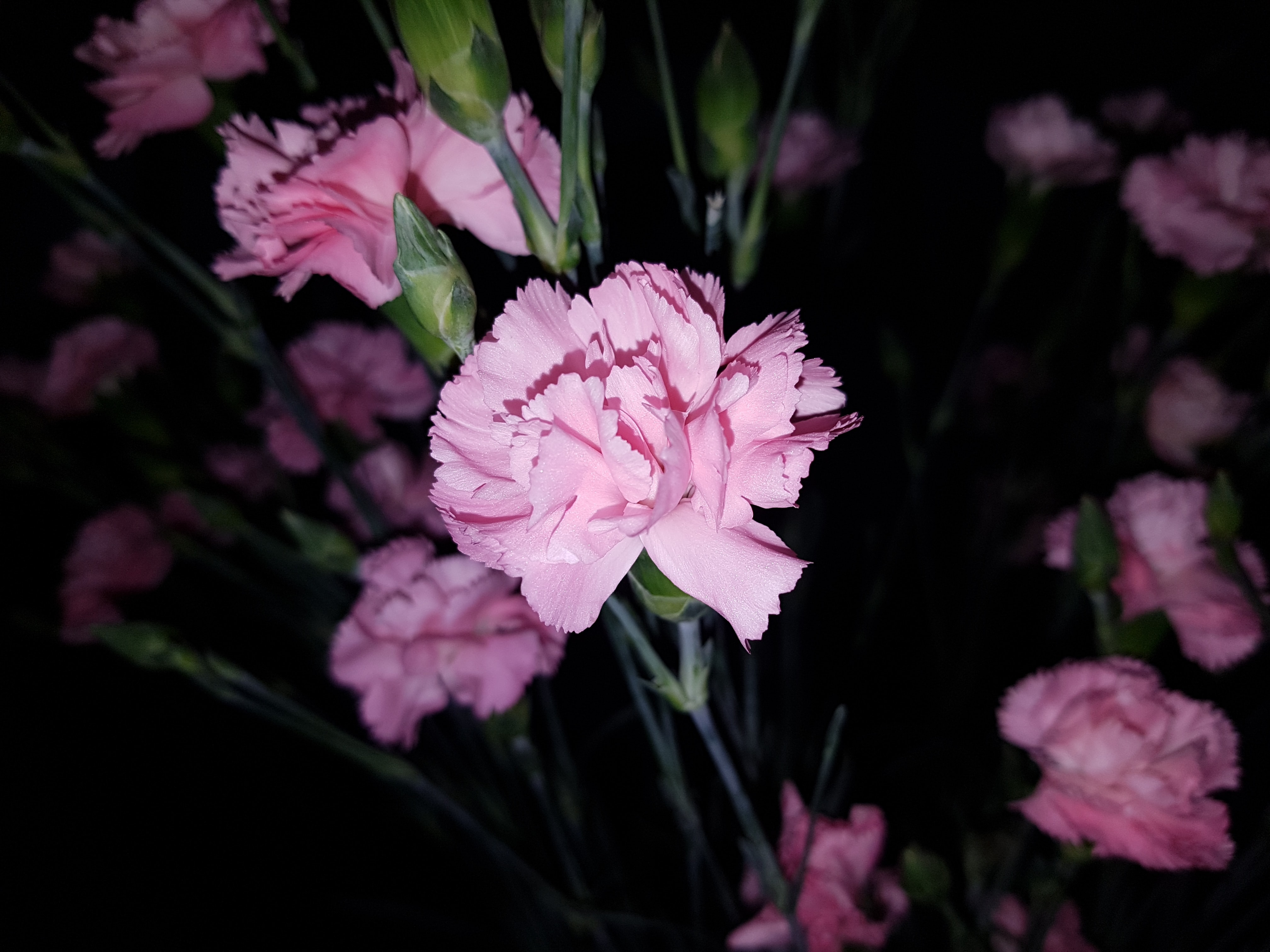 pink flower in selective photography