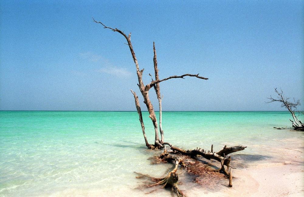 drift wood on seashore
