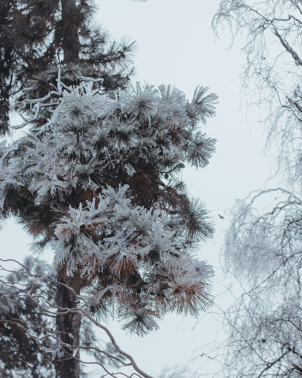 aerial photography of snow-covered trees during daytime