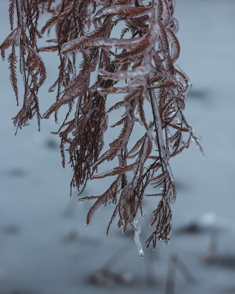 plants covered with ice