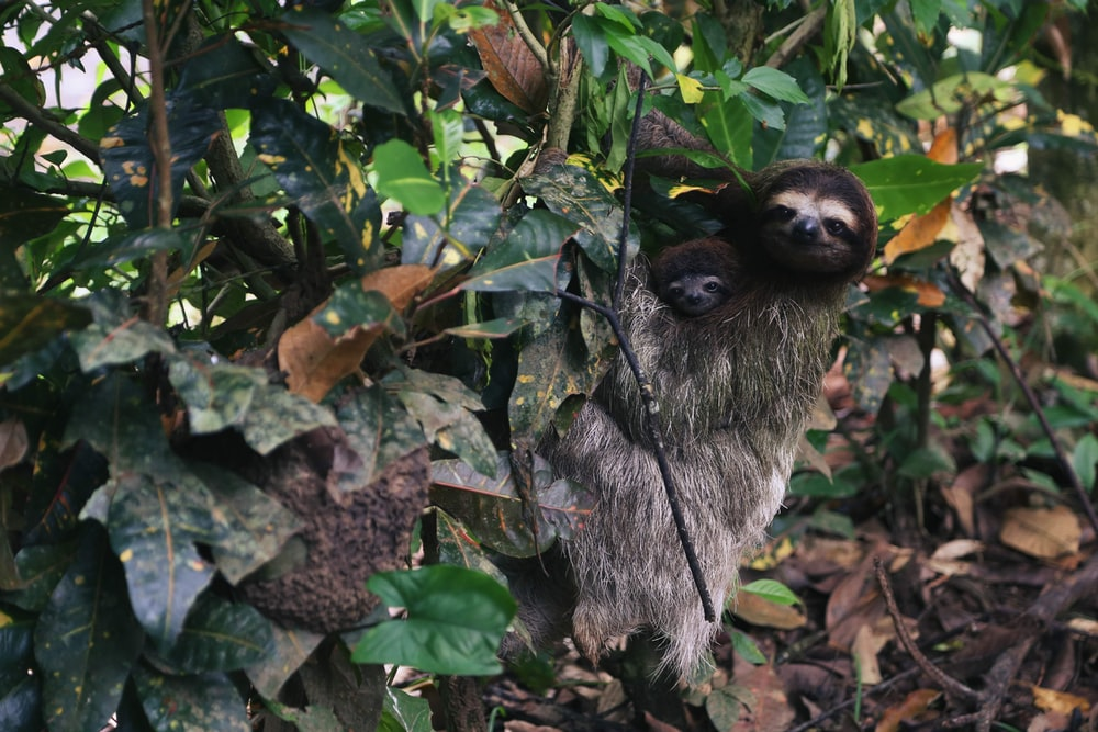 brown animal on tree