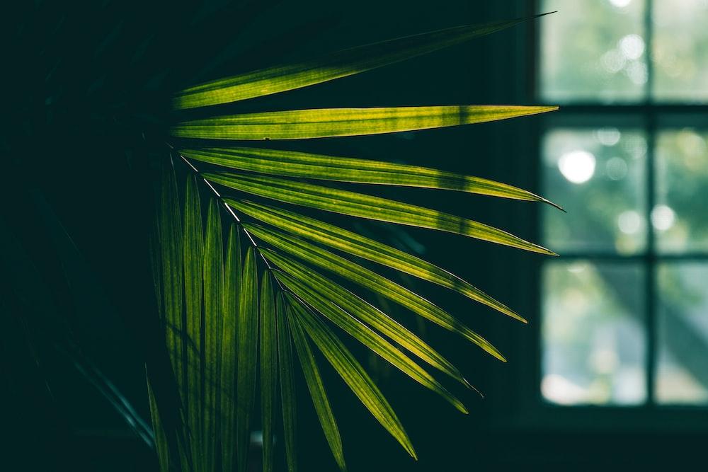 green palm tree near window selective focus photography