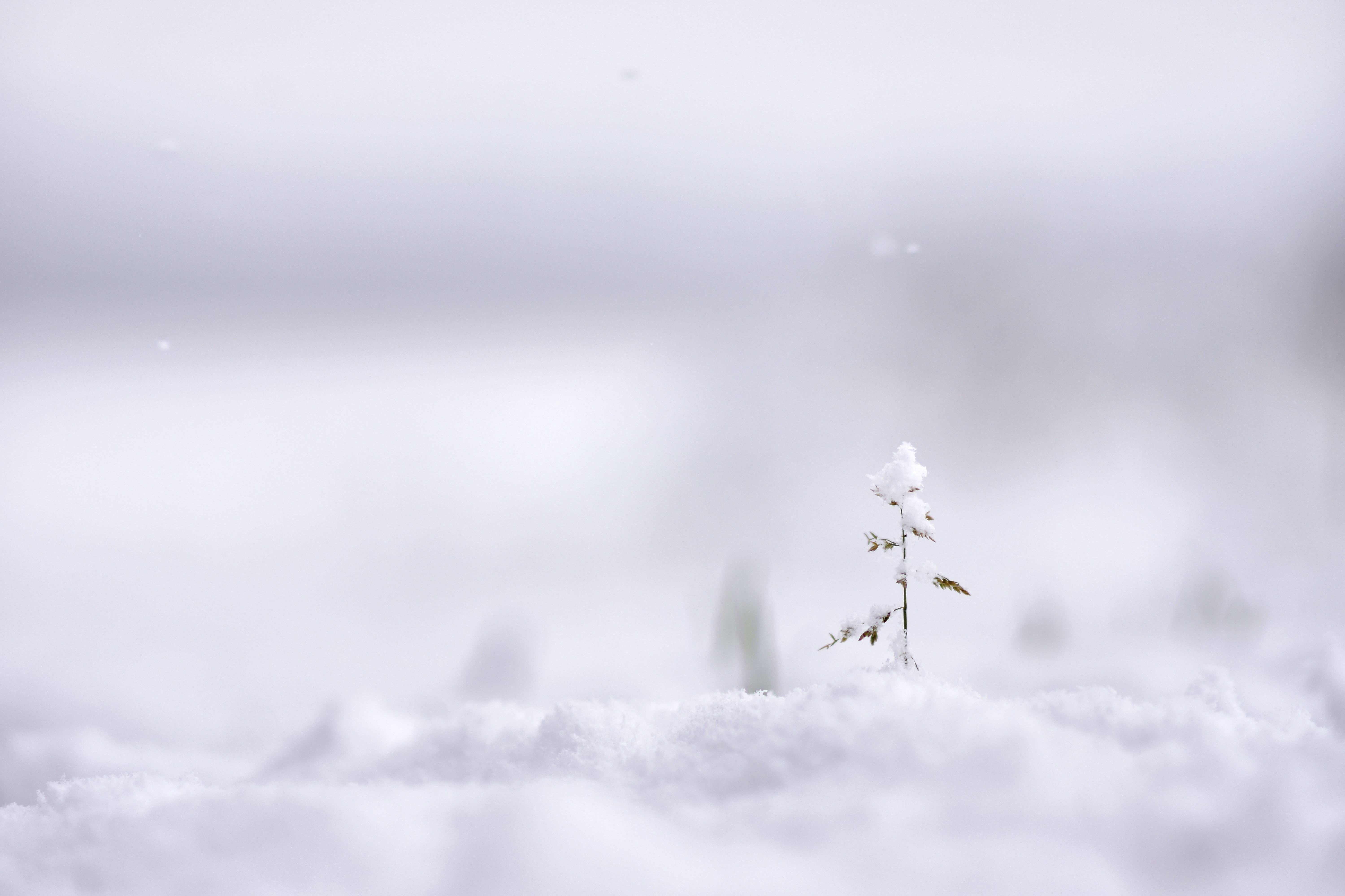 selective focus photography of plant covered with snow