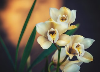 blooming white and yellow flowers