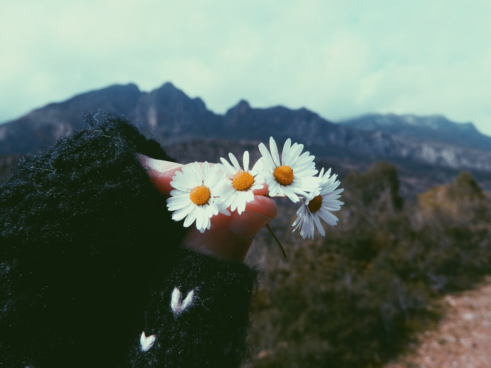 four white flowers held by hand at mountain
