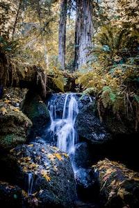 water stream along green plants