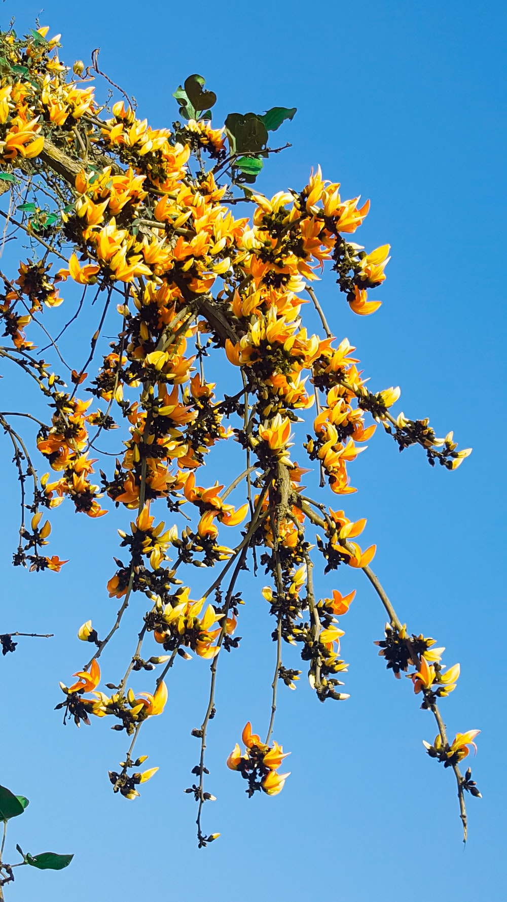 low angle photography of yellow-petaled flowers