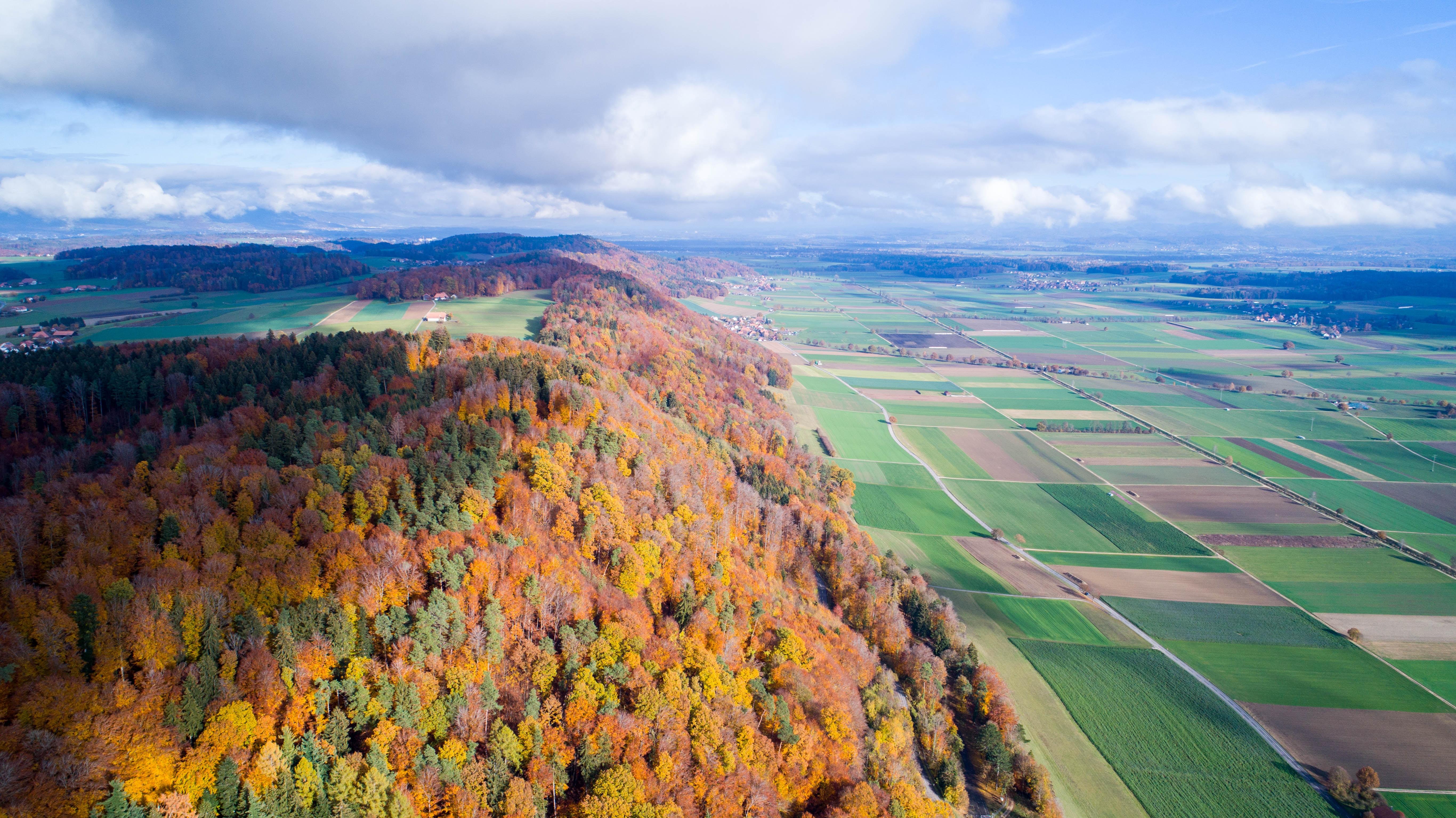 high-angle photography of tree and mountain