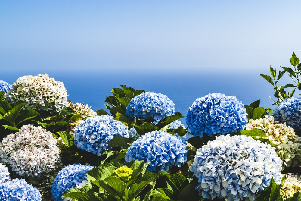 blue and yellow petaled flowers under blue sky
