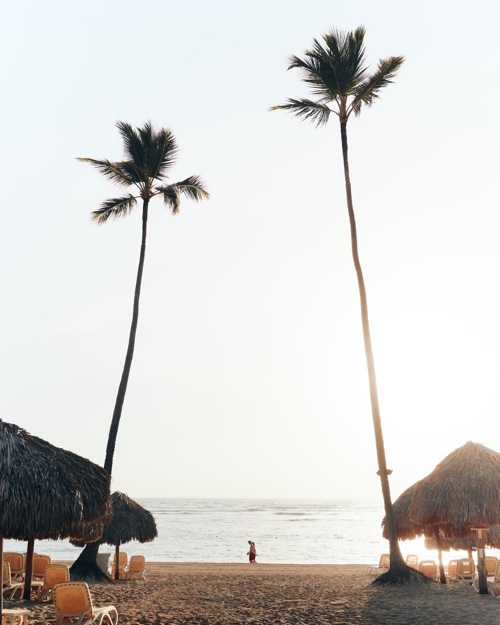 green palm trees on beach shore during daytime