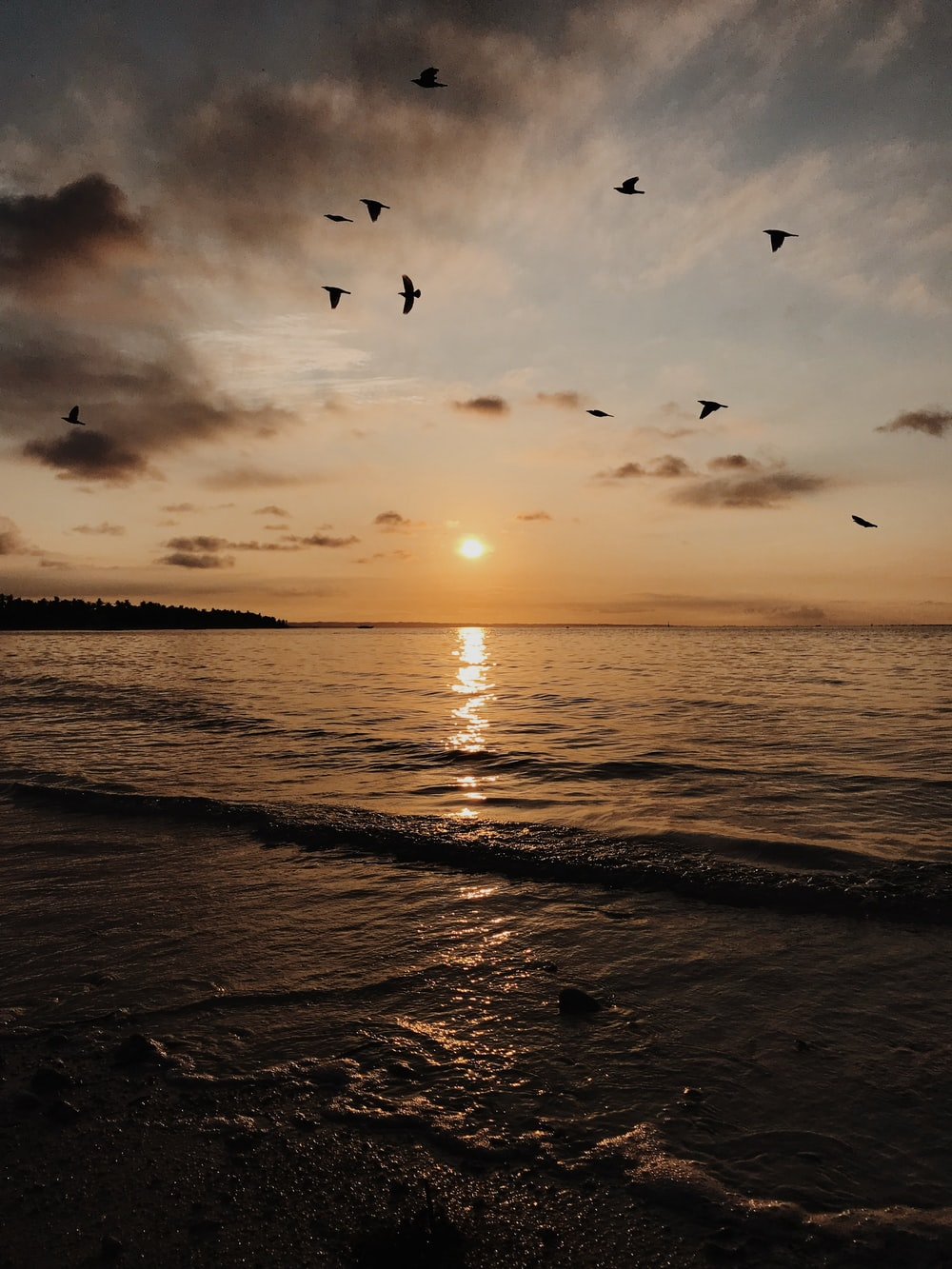 silhouette photography of flock of birds flying above shore