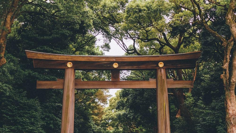 brown torii gate under tall trees