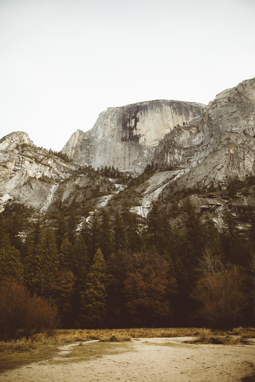 pine trees beside mountain