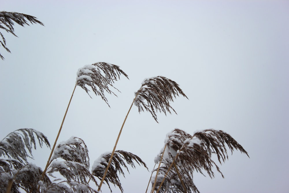 snow-covered palm trees during daytime