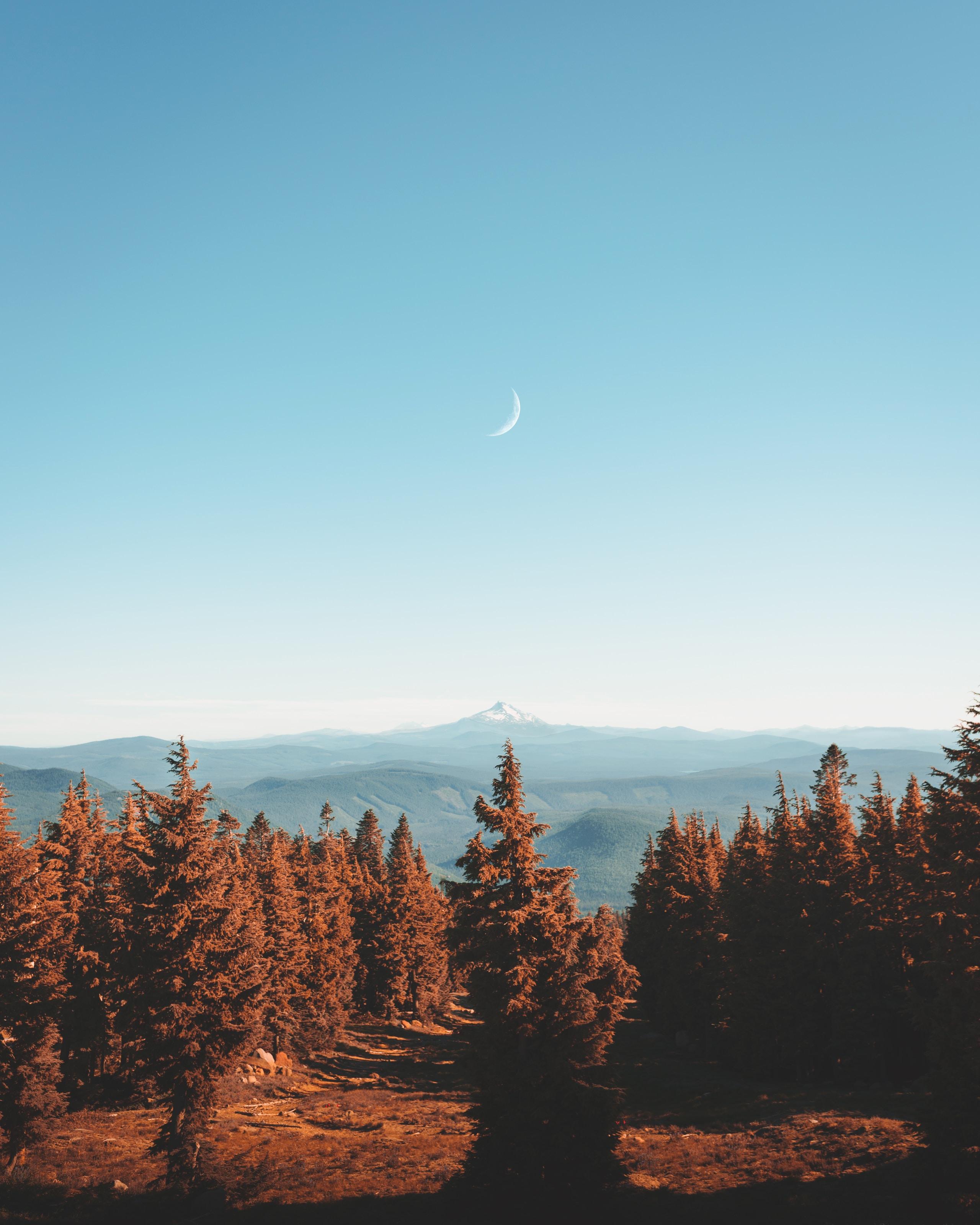 brown-leafed trees under blue sky