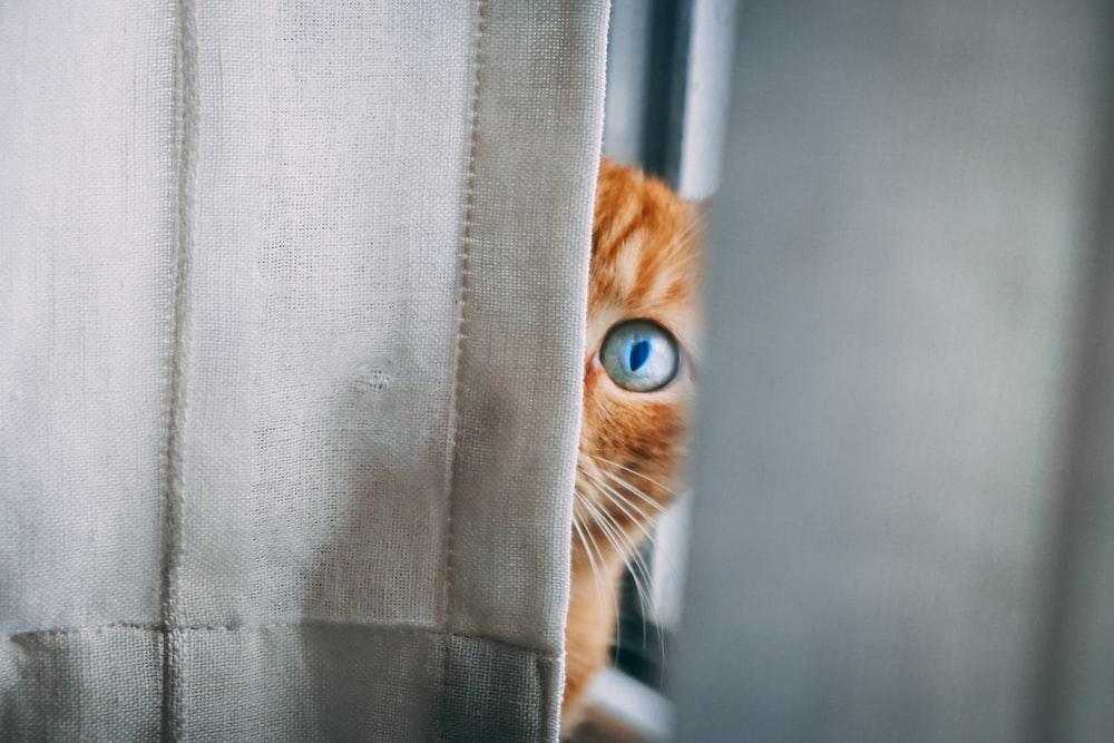 orange tabby cat peeping on white textile