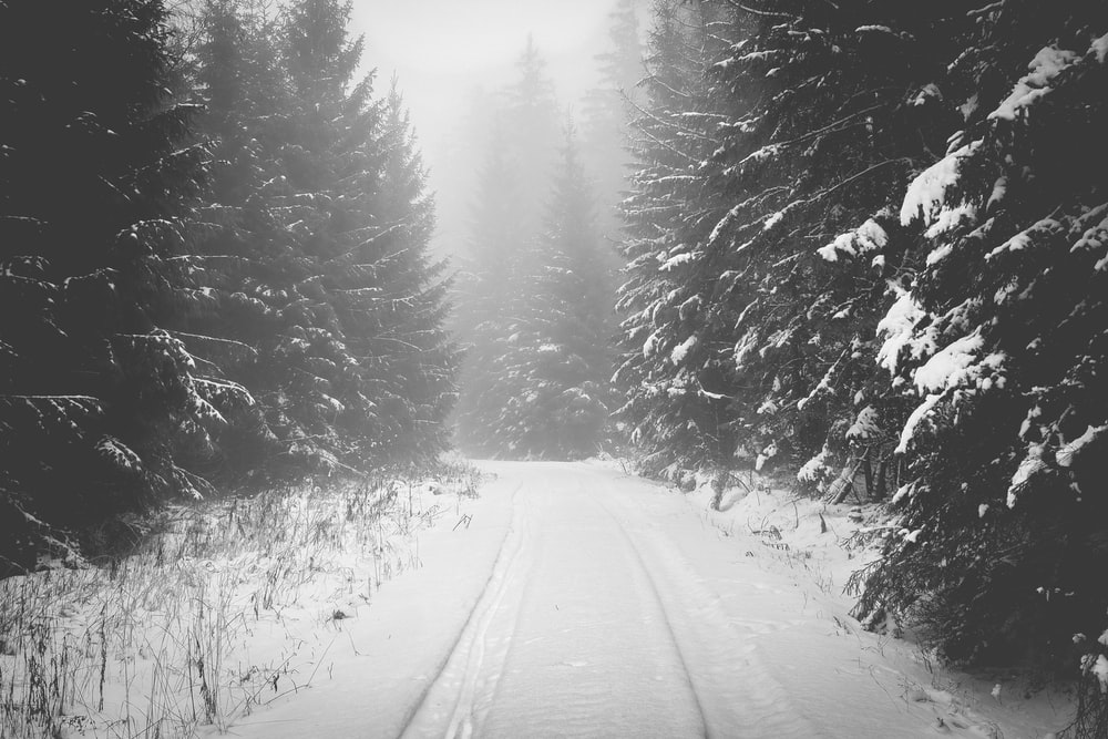 snow covered road between pine trees