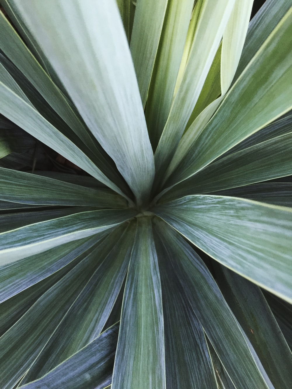green linear plant