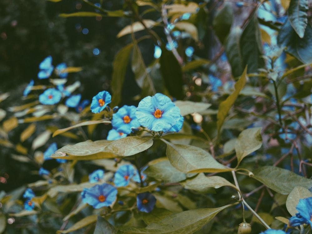 closeup photography of blue petaled flowers