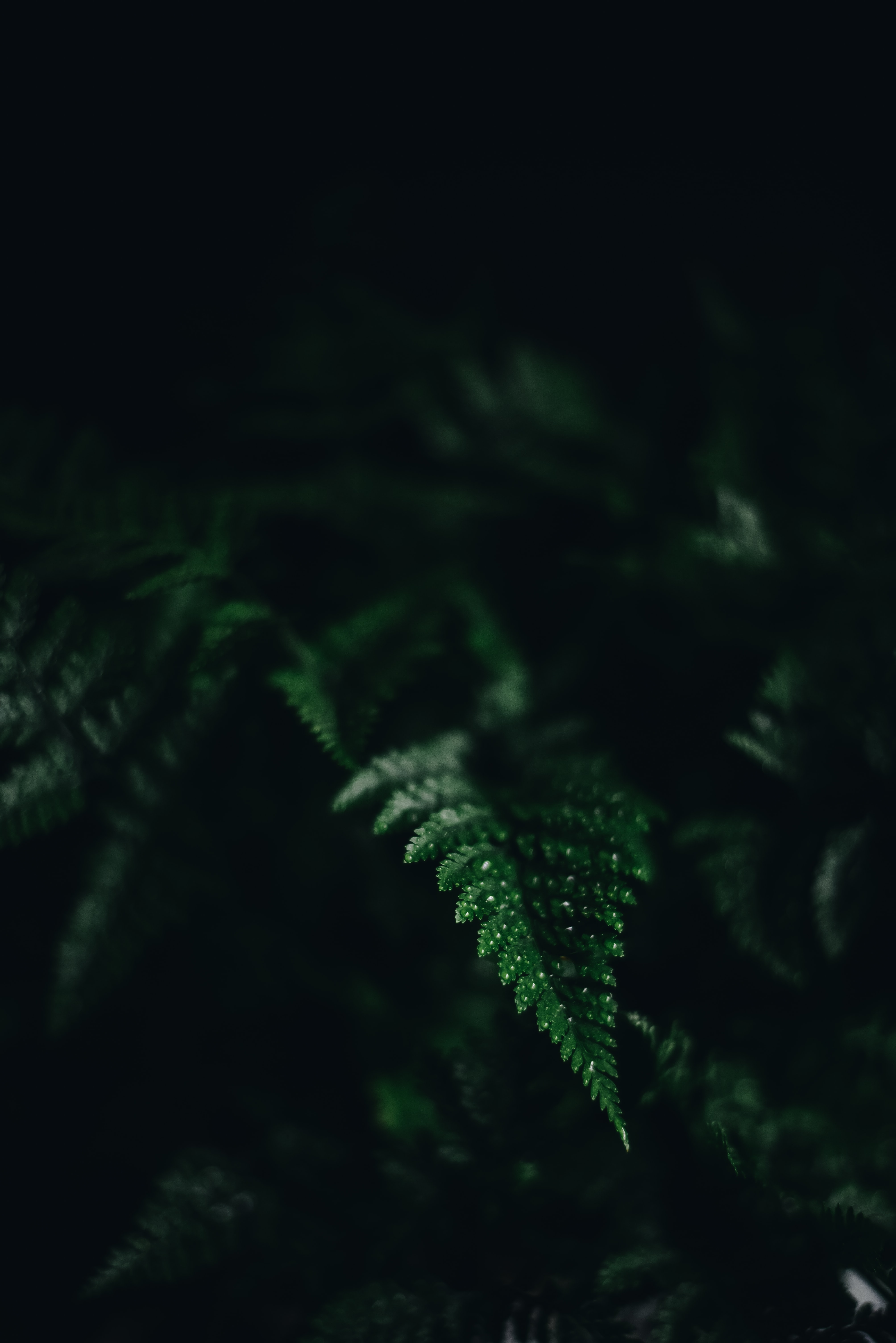 selective focus photography of fern leaf