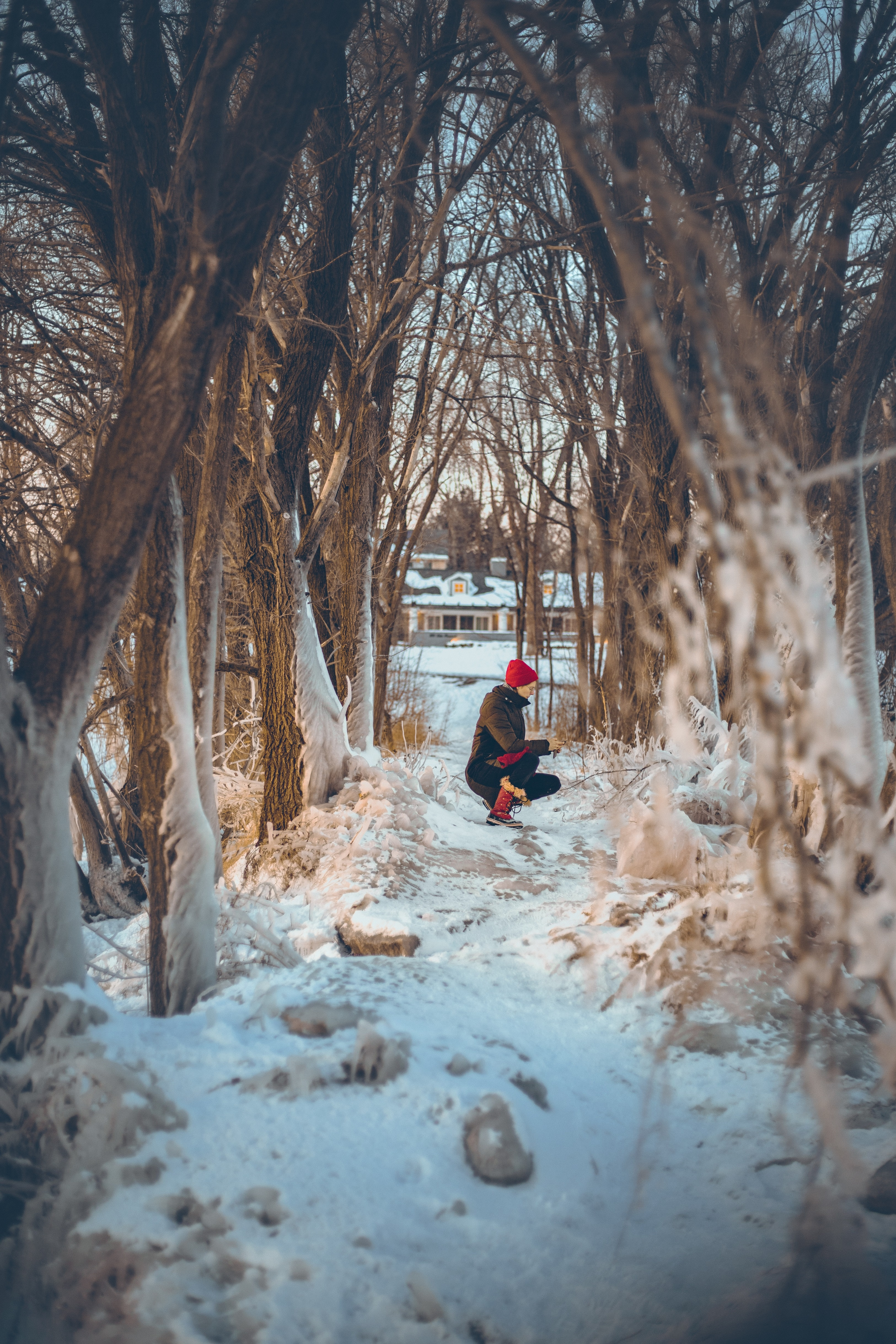 person sitting under leafless trees