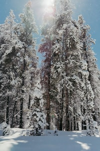 forest trees covered of snow during daytime