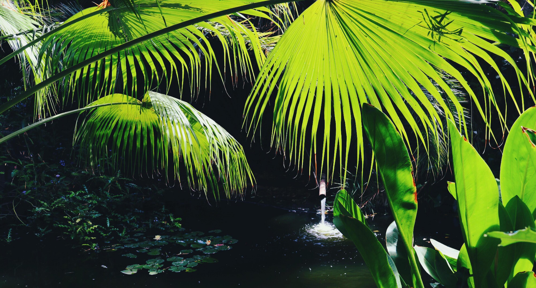 lake under green palm plant