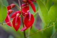 red petaled-flower