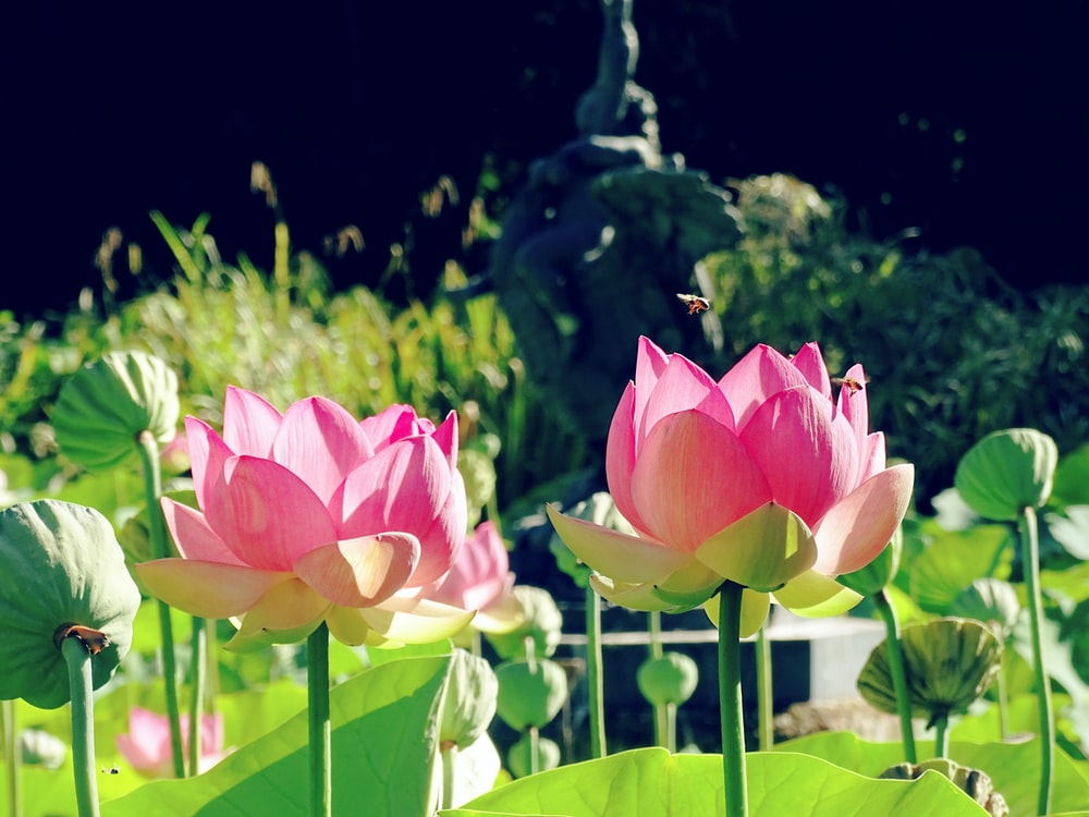 low angle photo of pink-petaled flowers