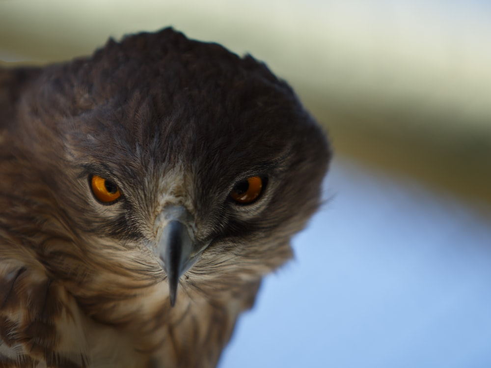 brown hawk on selective focus photography