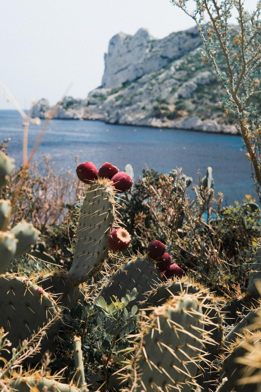 green cactus near seashore