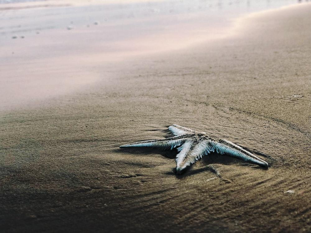 gray starfish on seashore