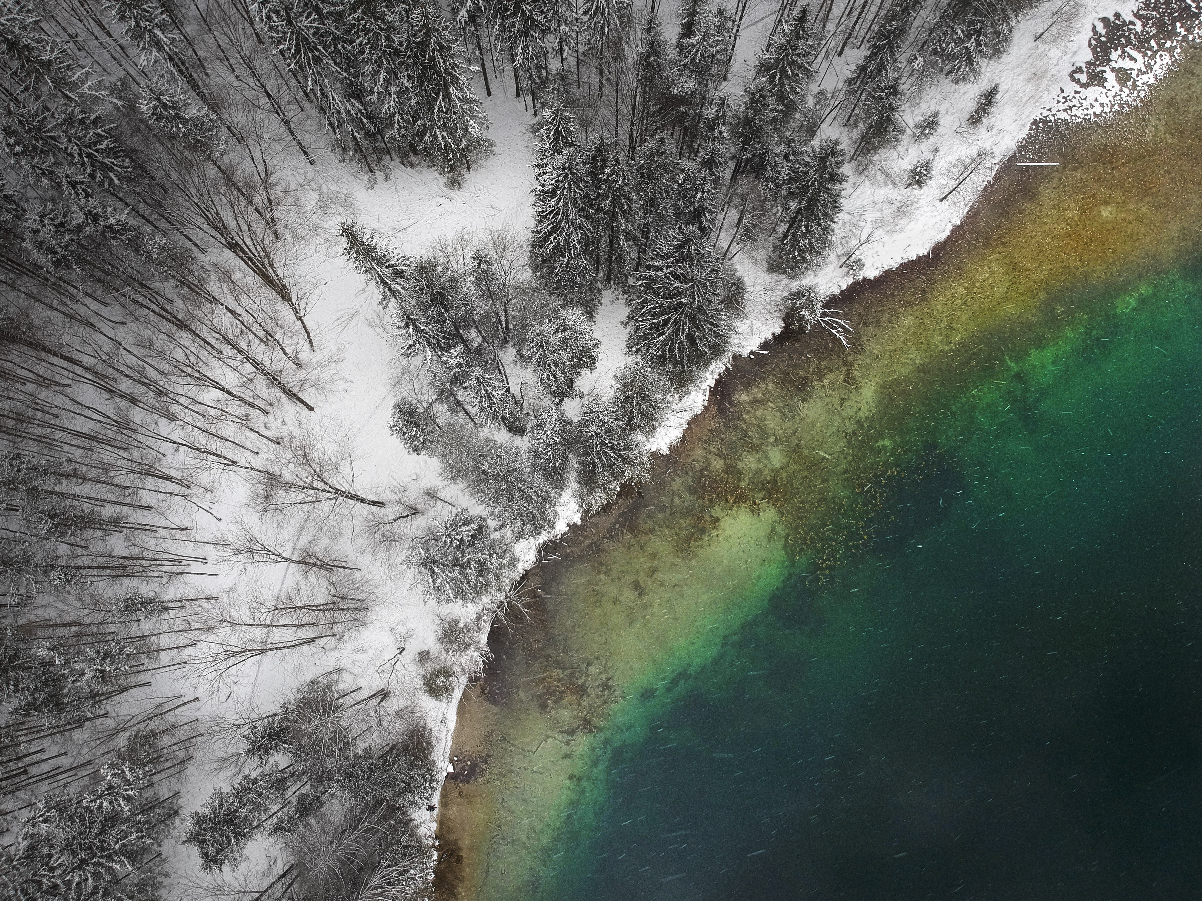 aerial photography of body of water near snow covered trees