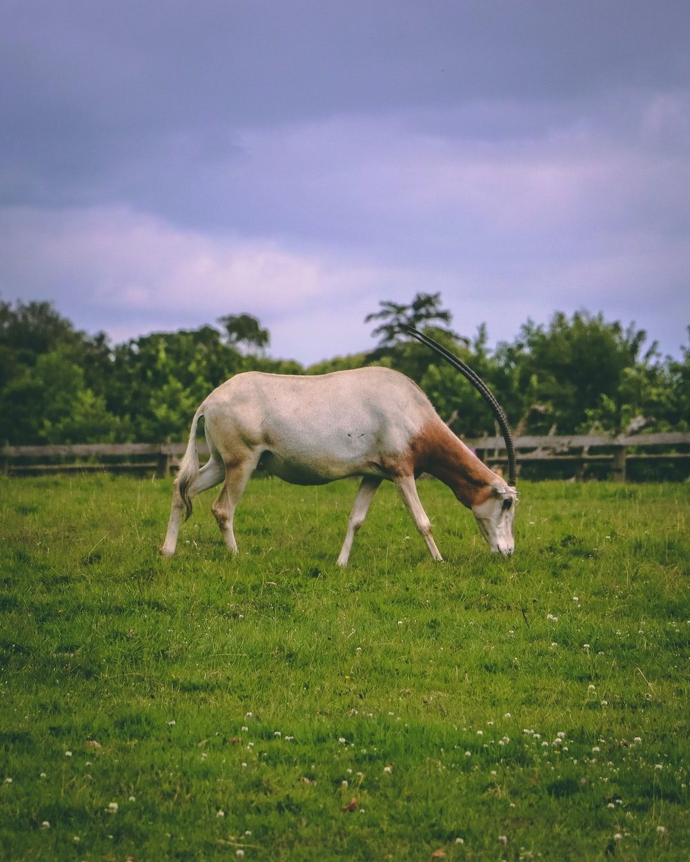 gray and brown horse on green grassfield