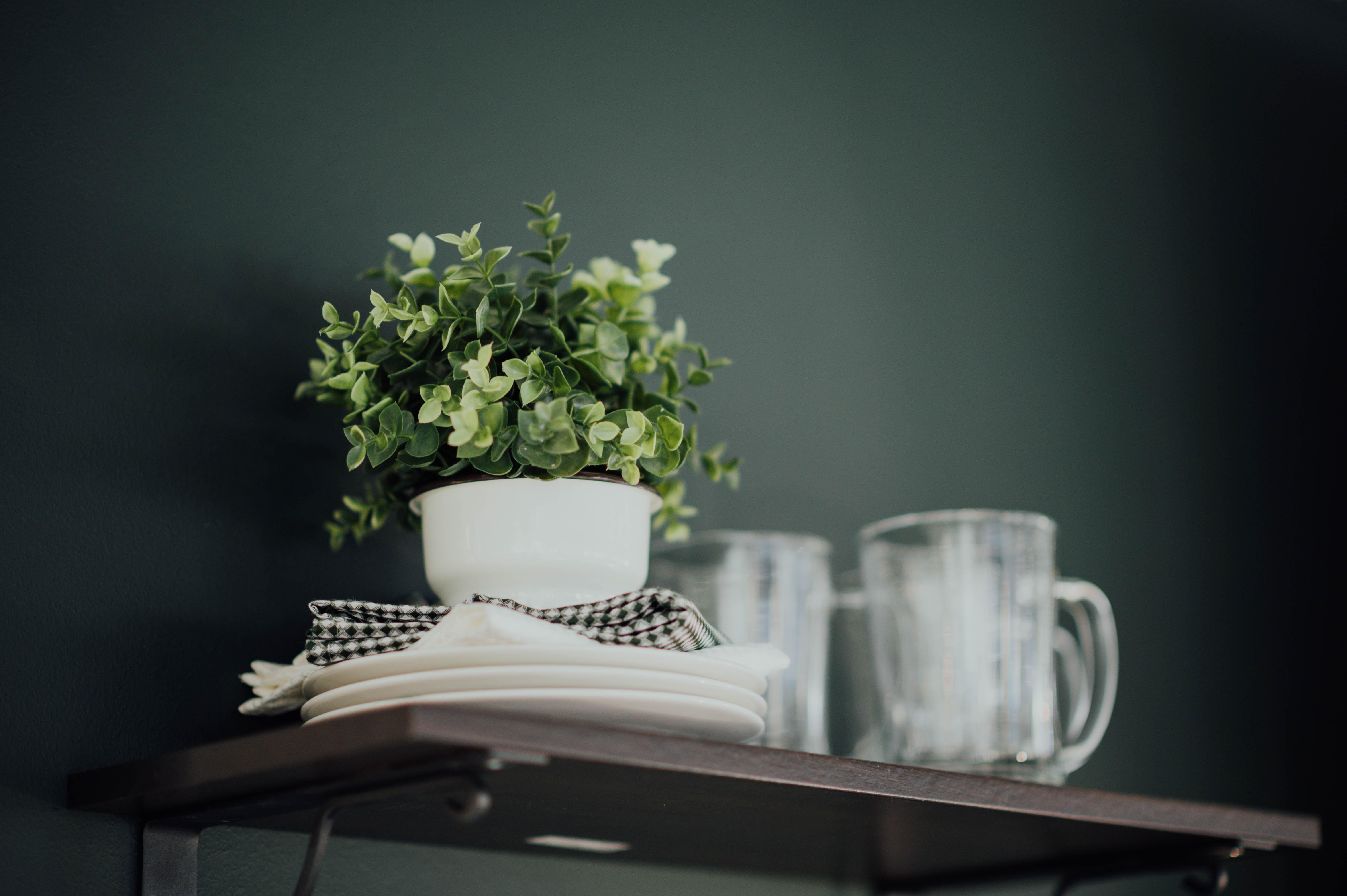 green plant on pot