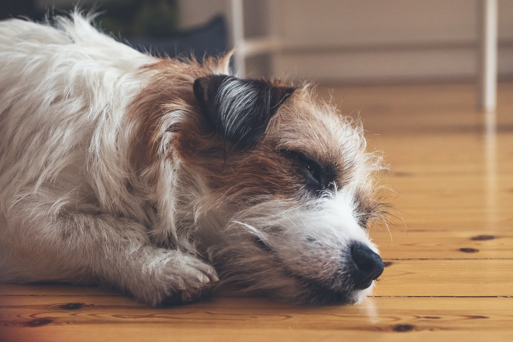 selective focus photography of white and brown dog