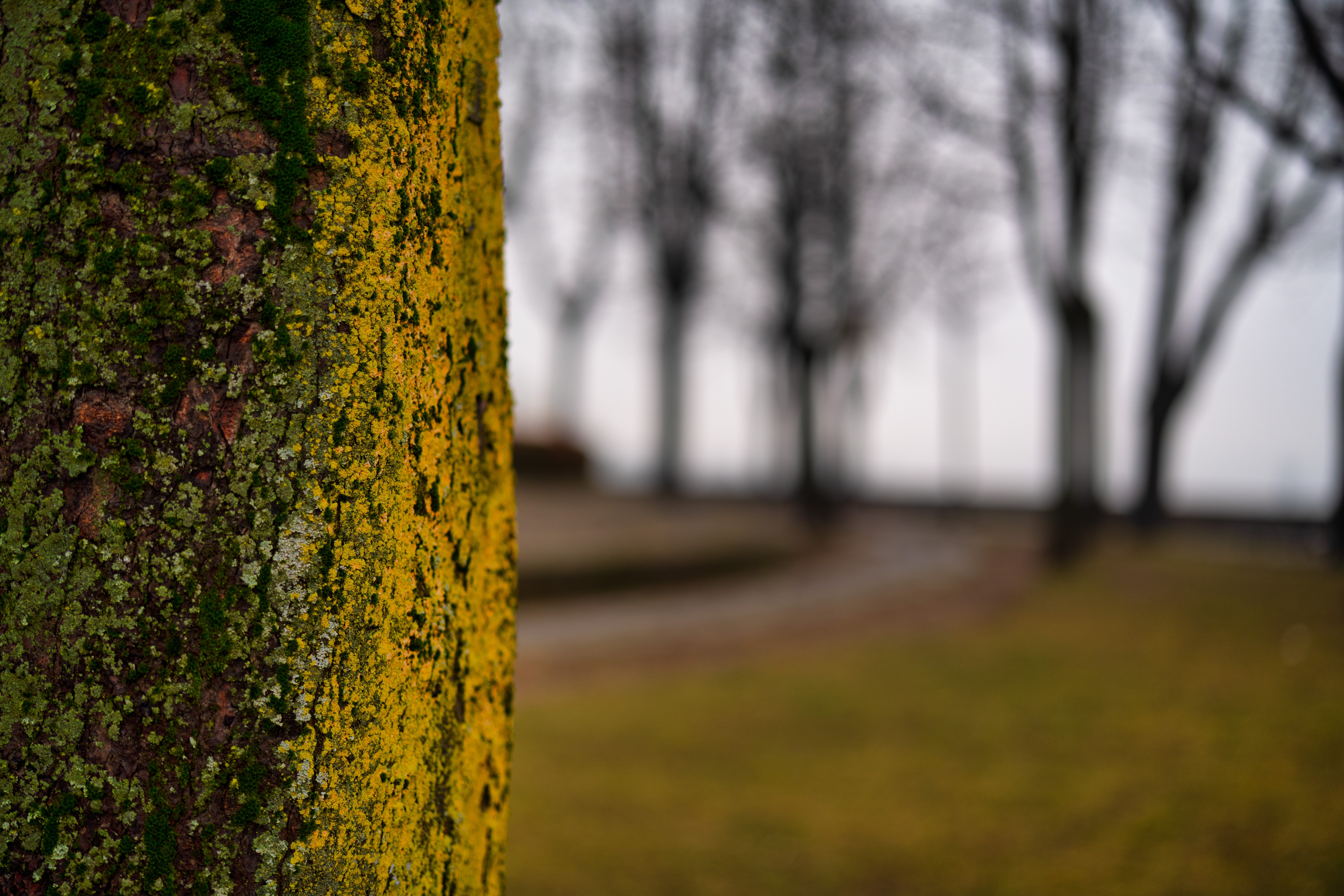selective focus photography of tree