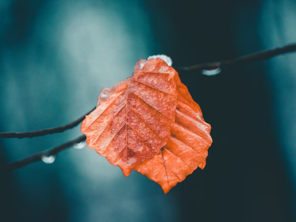 selective focus photo of brown leaf
