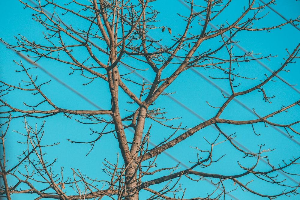 bare tree under green sky