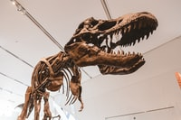 low-angle photography of dinosaur inside museum